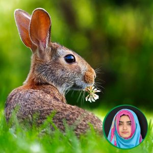 Online Zoology Classes | FSc/Inter XI | Pre-Medical | Sindh Board